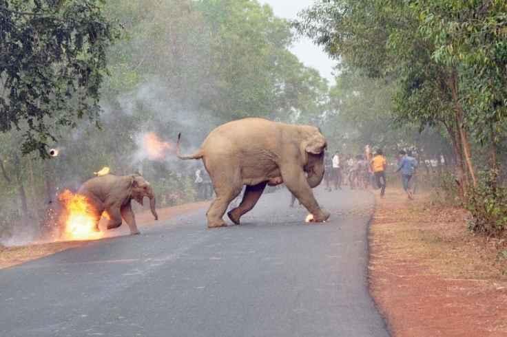 01-elephant-fire