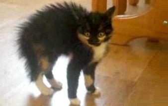 Video-chat-effrayé-avec-les-poils-hérissés